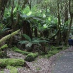 Beautiful walks in Tasmania