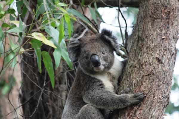 koala motorhome hire melbourne