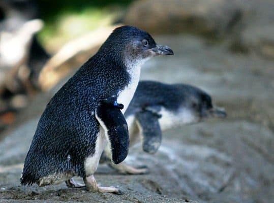 little penguins motorhome hire melbourne