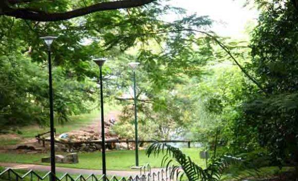 George brown botanical gardens darwin