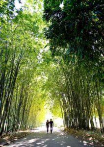 Botanic Gardens, Brisbane, QLD