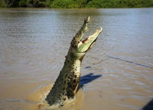 jumpic_croc_tour_jumping_croc