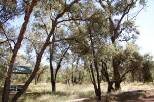 Tregole National Park near Morvin QLD
