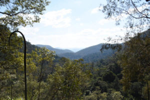 Views overlooking Kondalilla National Park
