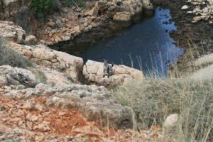 Black footed rock wallaby, Yardie Creek, Cape Range NP