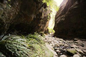 Mickey Creek Gorge Carnarvon Gorge