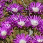 67 Wildflowers